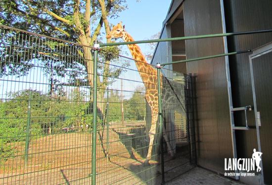 Opening Giraffenverblijf